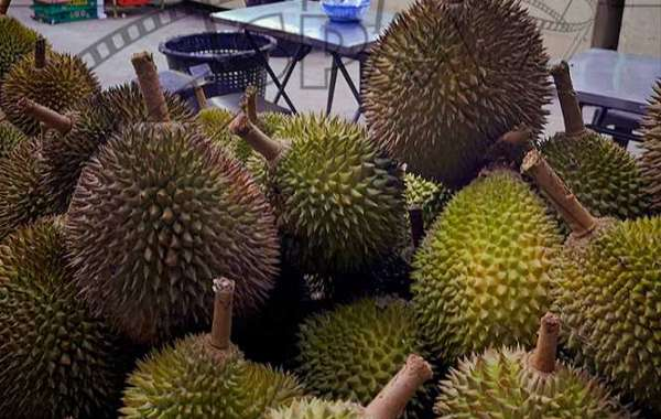• THE DURIAN – KING of FRUITS